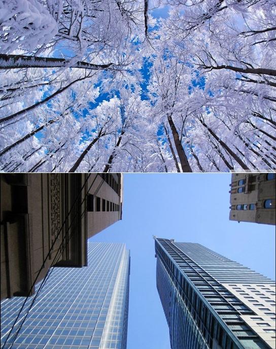 looking_up_through_trees_winter-wallpaper-1280x800-vert
